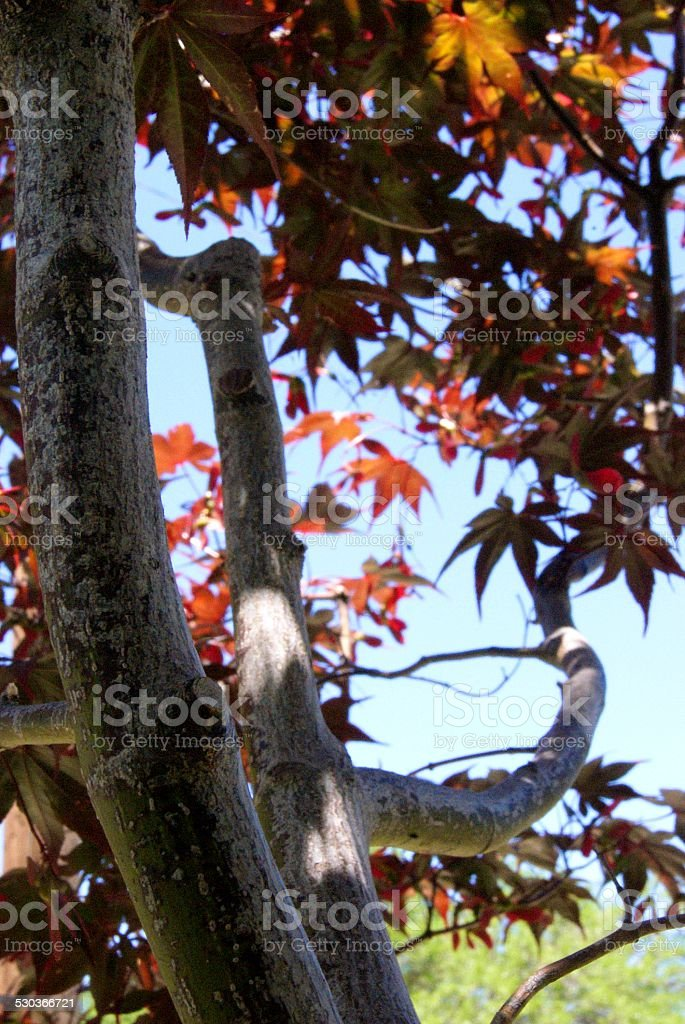 Rusty Tree Branches royalty-free stock photo