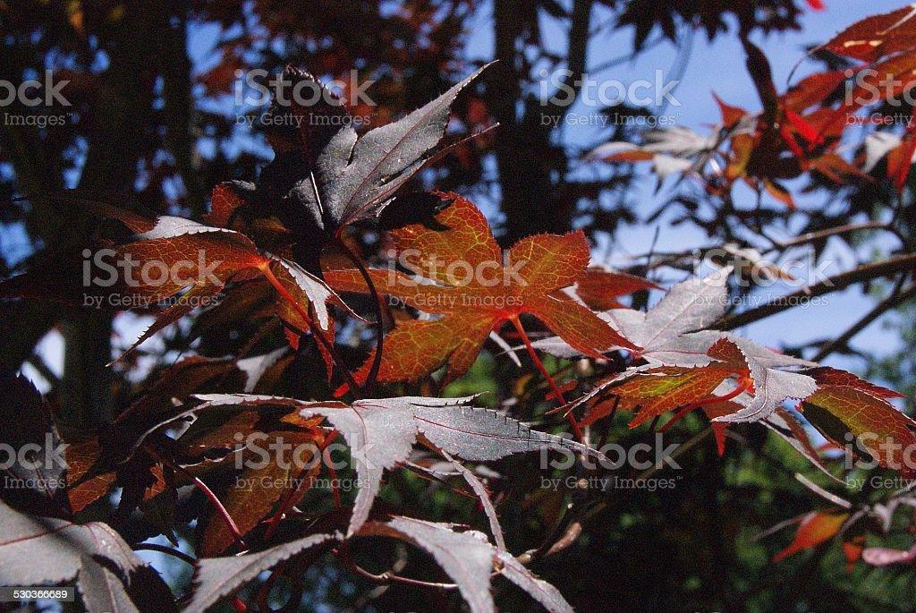 Rusty Tree royalty-free stock photo