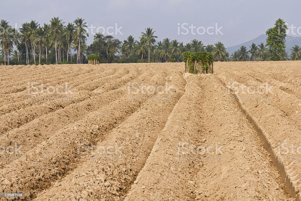 Rutted soil cultivation for cassava royalty-free stock photo