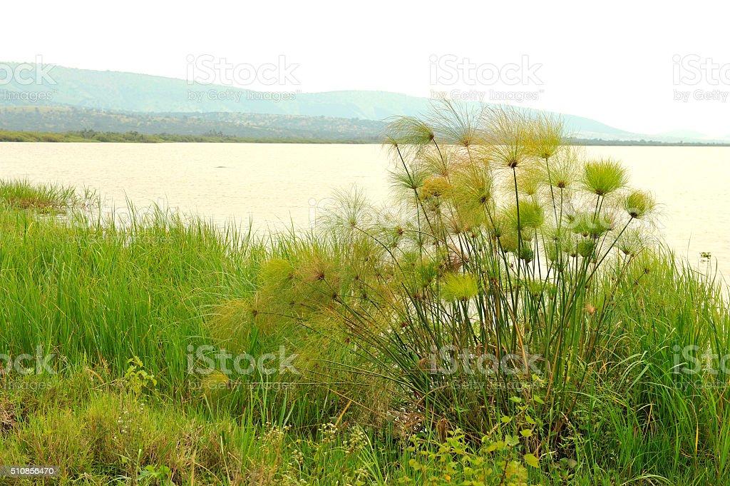 Rwanda: lake Hago into the Akagera National park stock photo