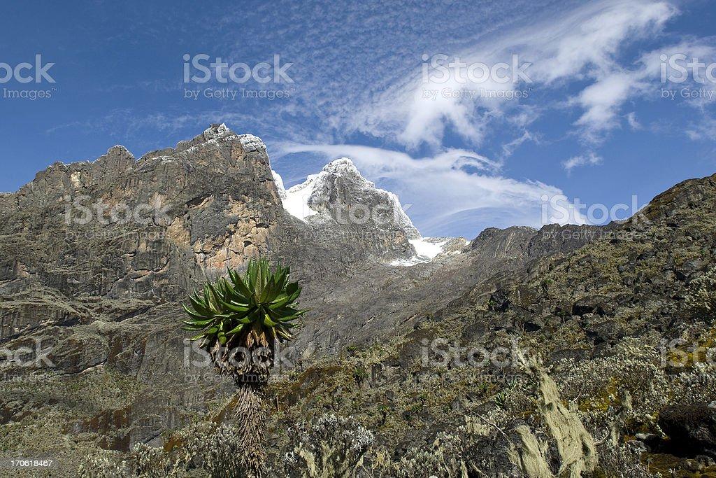 Rwenzori - Mountains of the Moon between Uganda and Congo royalty-free stock photo