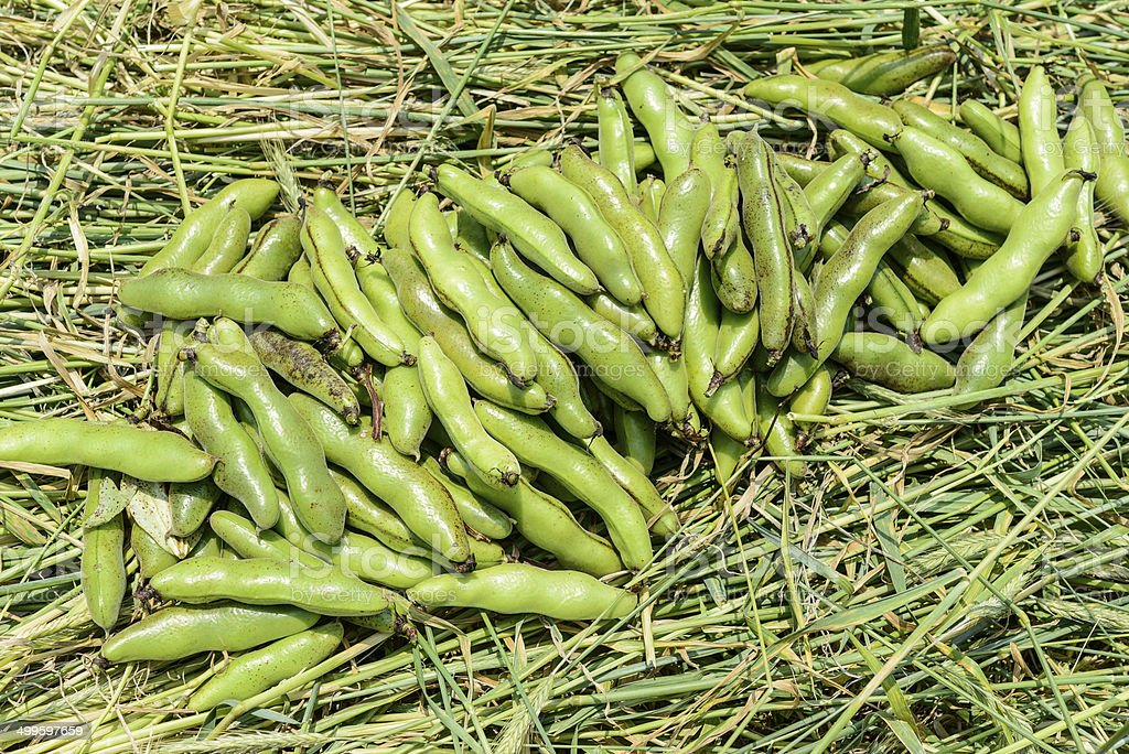 Rye and broad bean royalty-free stock photo