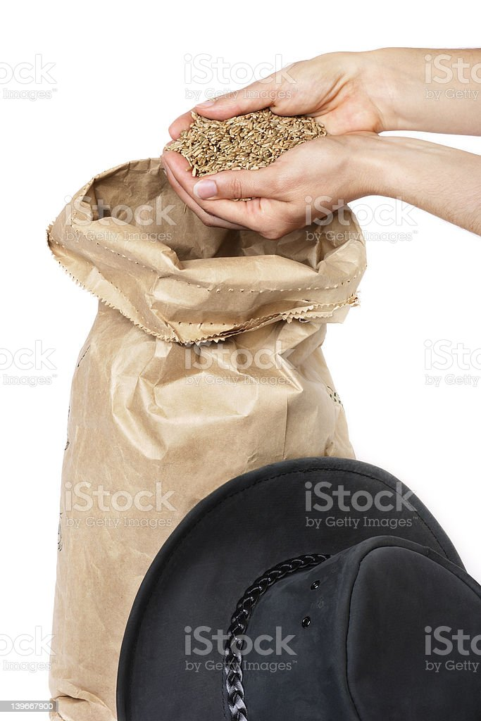 Rye grain royalty-free stock photo