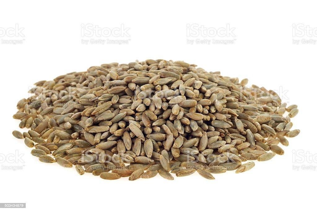 Rye grains on white background stock photo