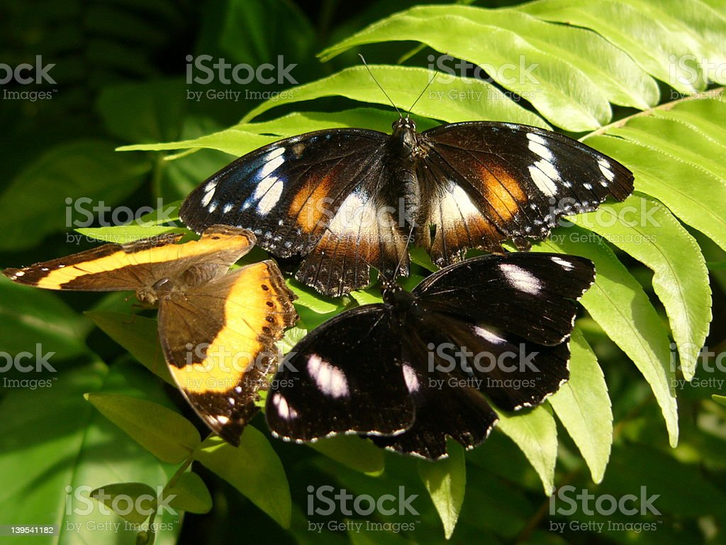 3`s a Crowd royalty-free stock photo