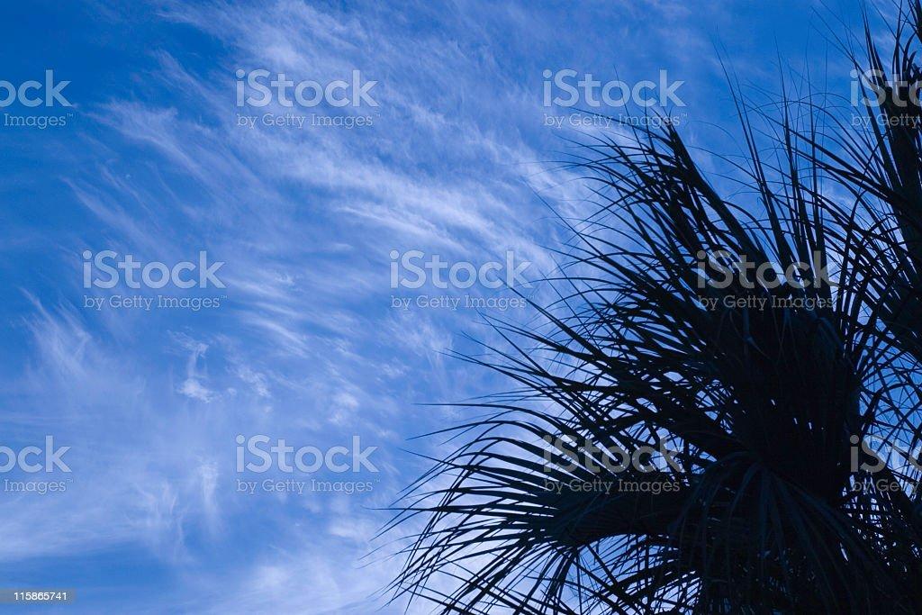 Sabal Silhouette royalty-free stock photo
