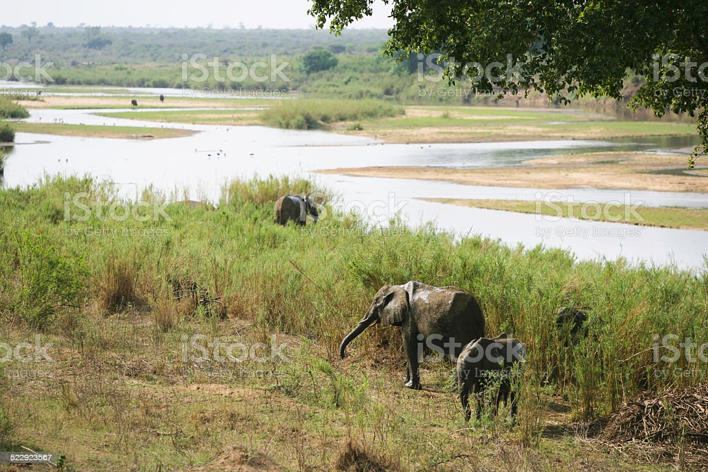 Sabie river in Kruger national park stock photo