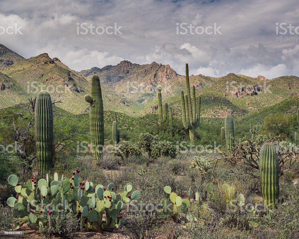Sabino Canyon, Arizona stock photo