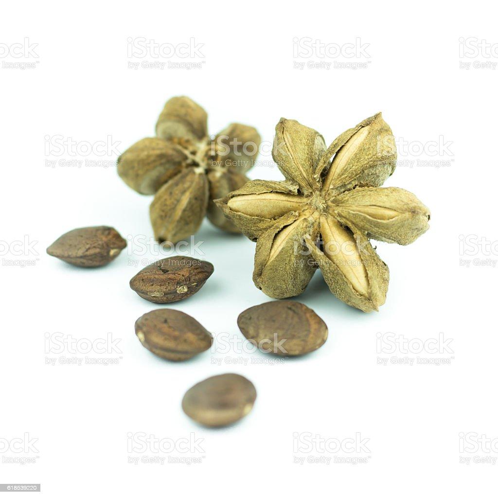 sacha inchi peanut seed isolated on white background stock photo