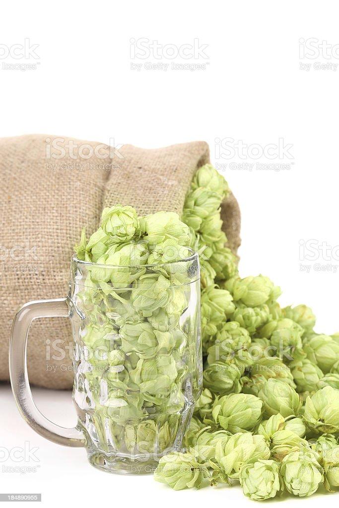 Sack and mug with hop. royalty-free stock photo