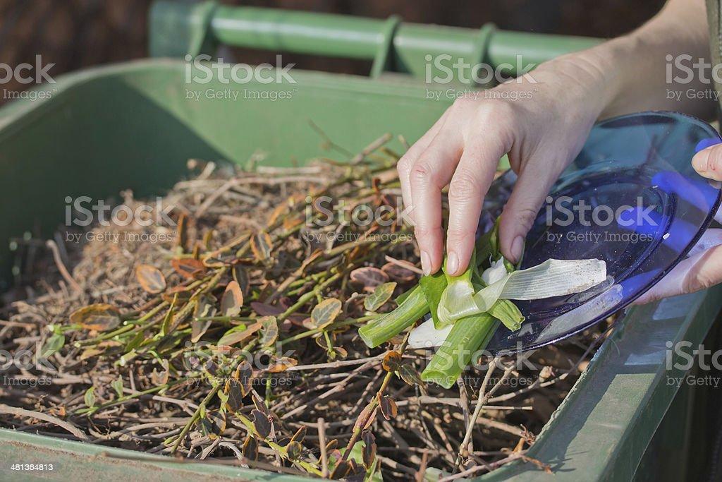 Sacking of organic waste into a green bins stock photo