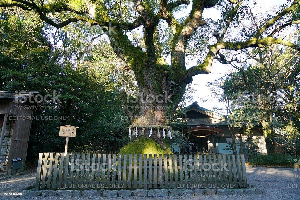 Sacred camphor tree in Atsuta Shrine, Nagoya stock photo