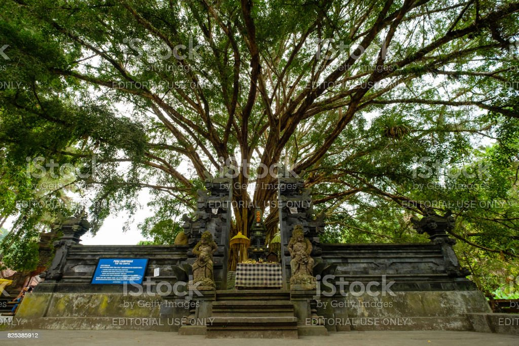 Sacred Campuhan Temple with big banyan tree at background stock photo