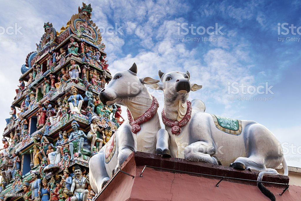 Sacred Cows Guarding an Indian Temple in Singapore stock photo