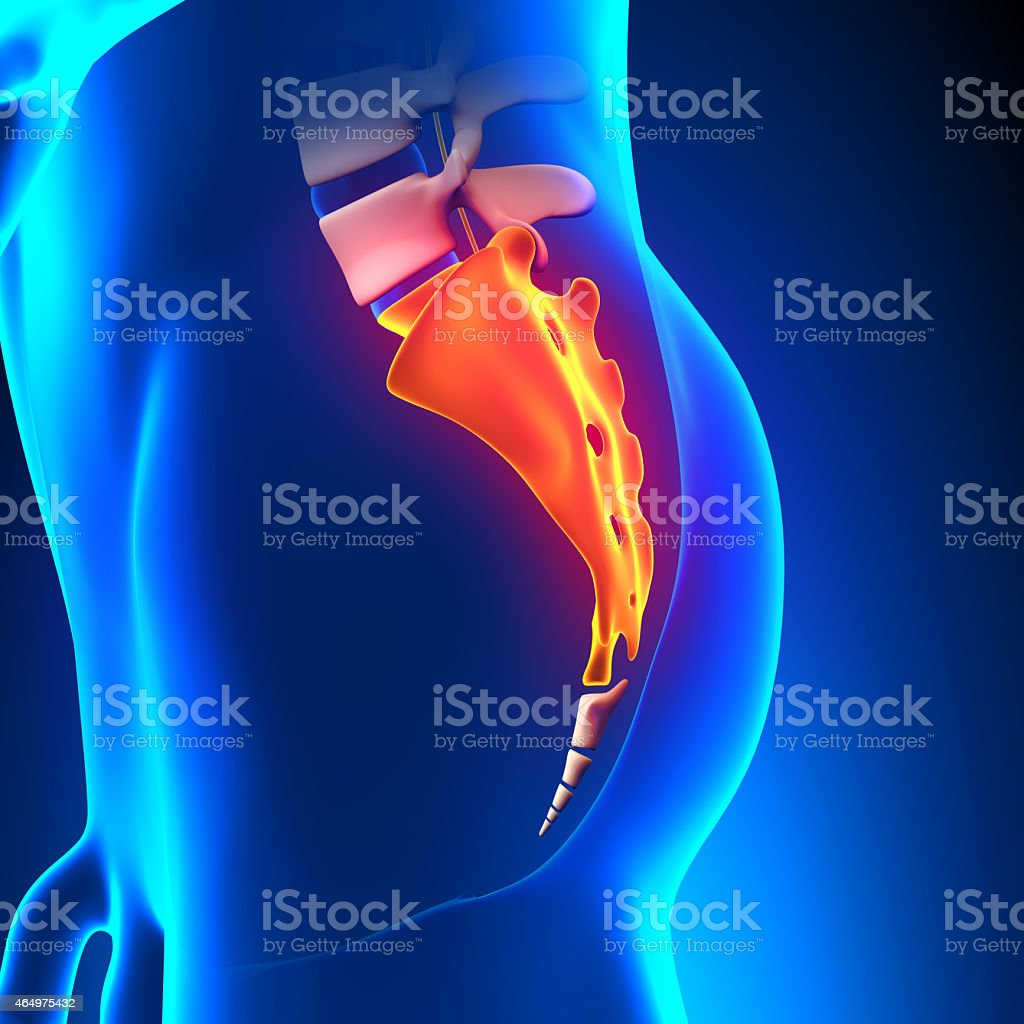 Sacrum Bone Anatomy pain stock photo