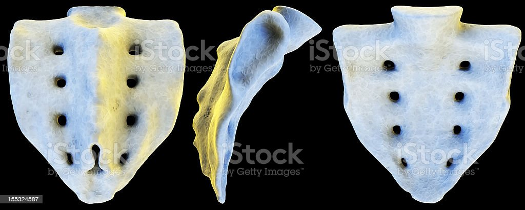 3D Sacrum on black royalty-free stock photo