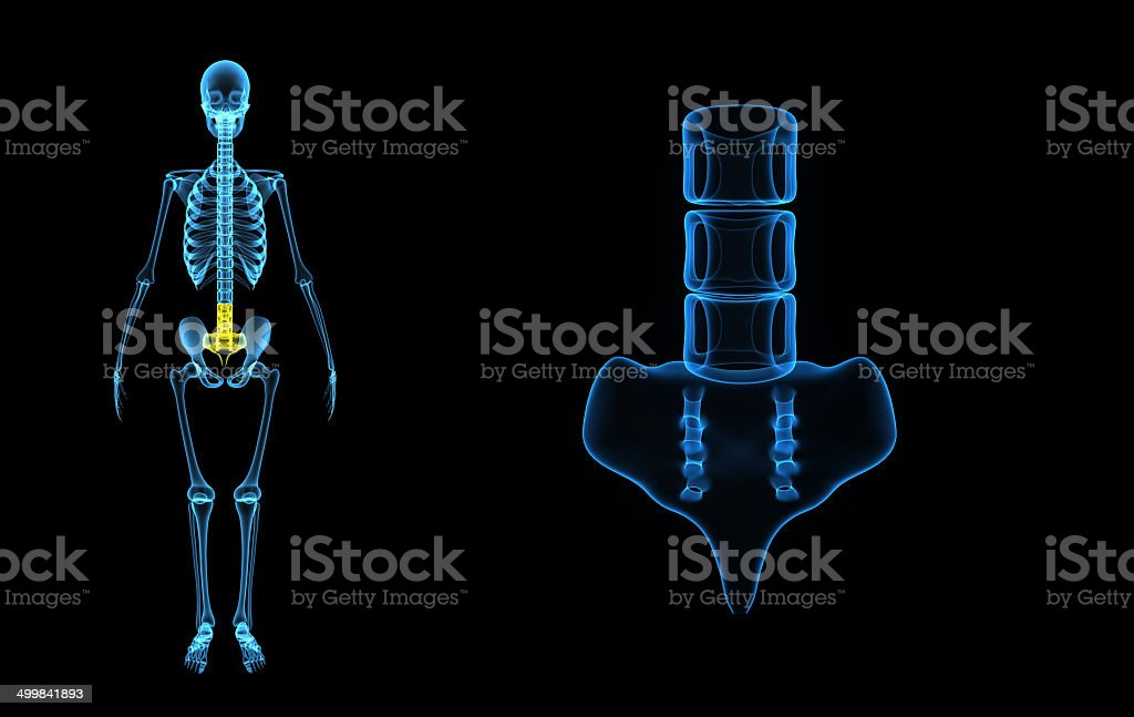 Sacrum royalty-free stock photo