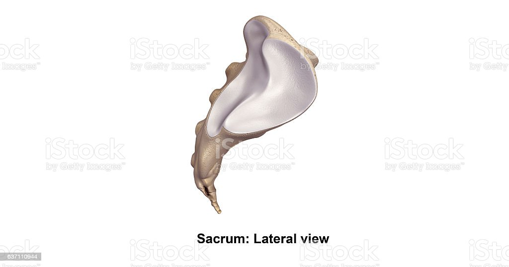 Sacrum_Lateral view stock photo