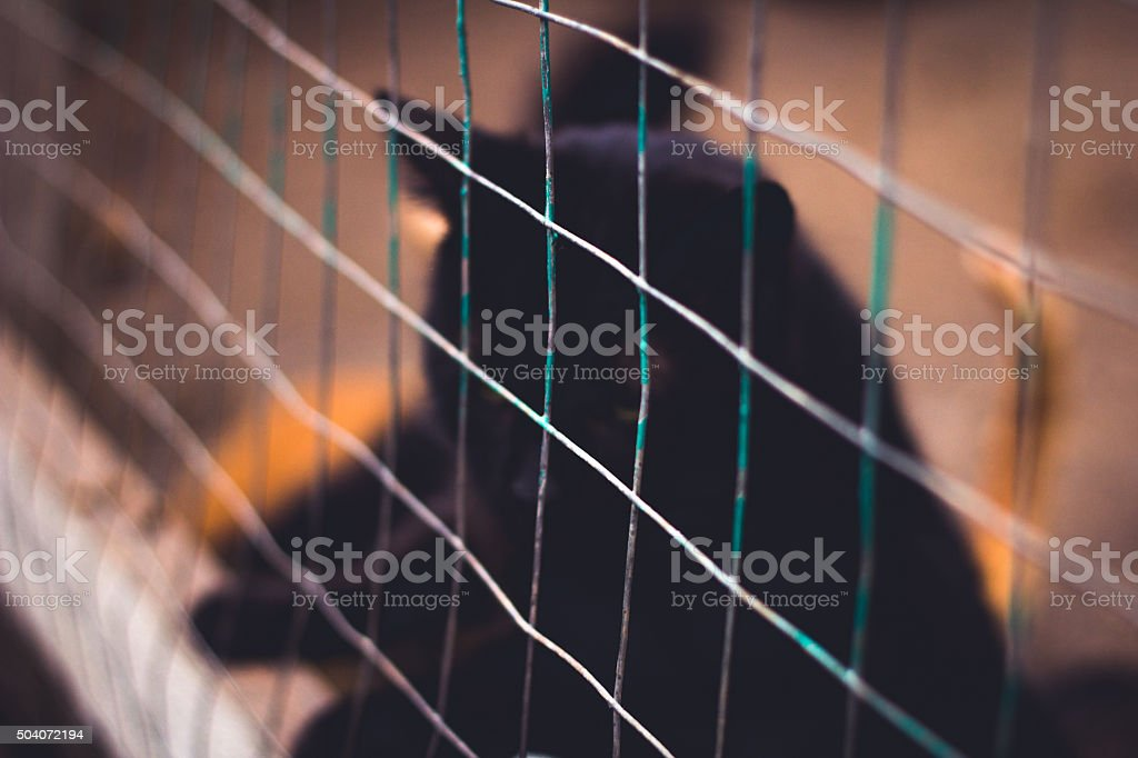 Sad black cat  in a cage stock photo