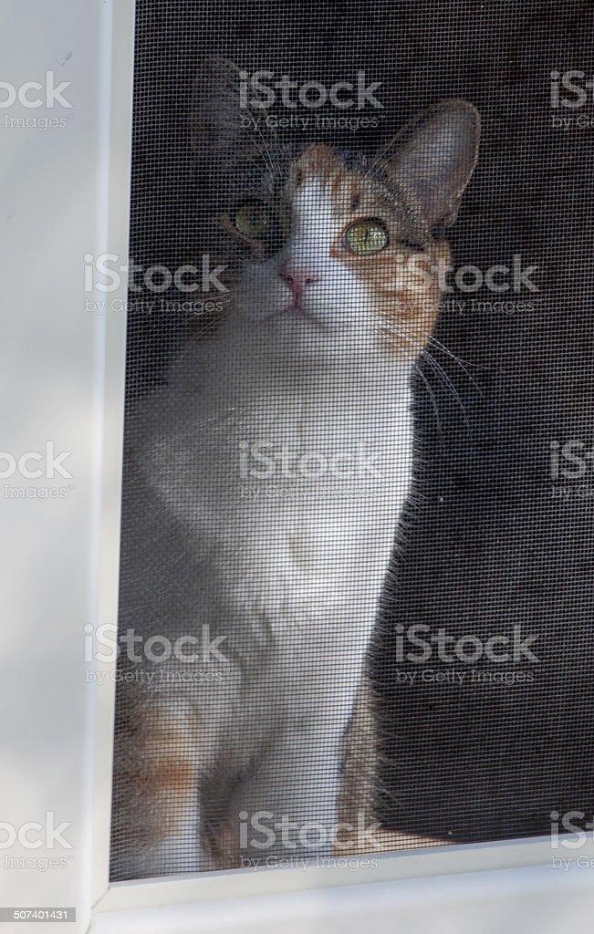 Sad Cat Behind Screen Door stock photo