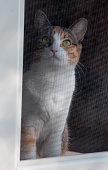 Sad Cat Behind Screen Door