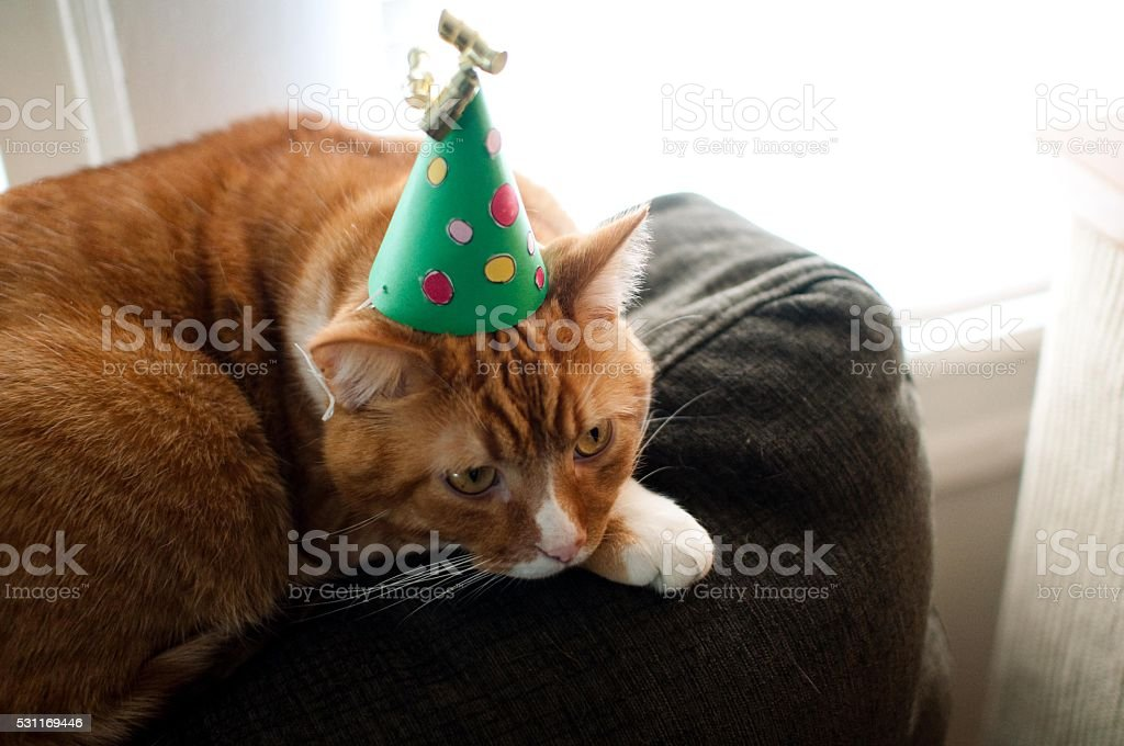 Sad cat in a party hat stock photo