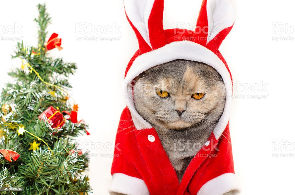 Sad Christmas cat stock photo
