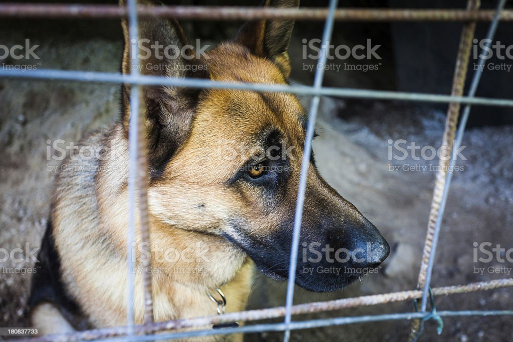 Sad Dog Behind the Bars of a Cage Looking Away royalty-free stock photo