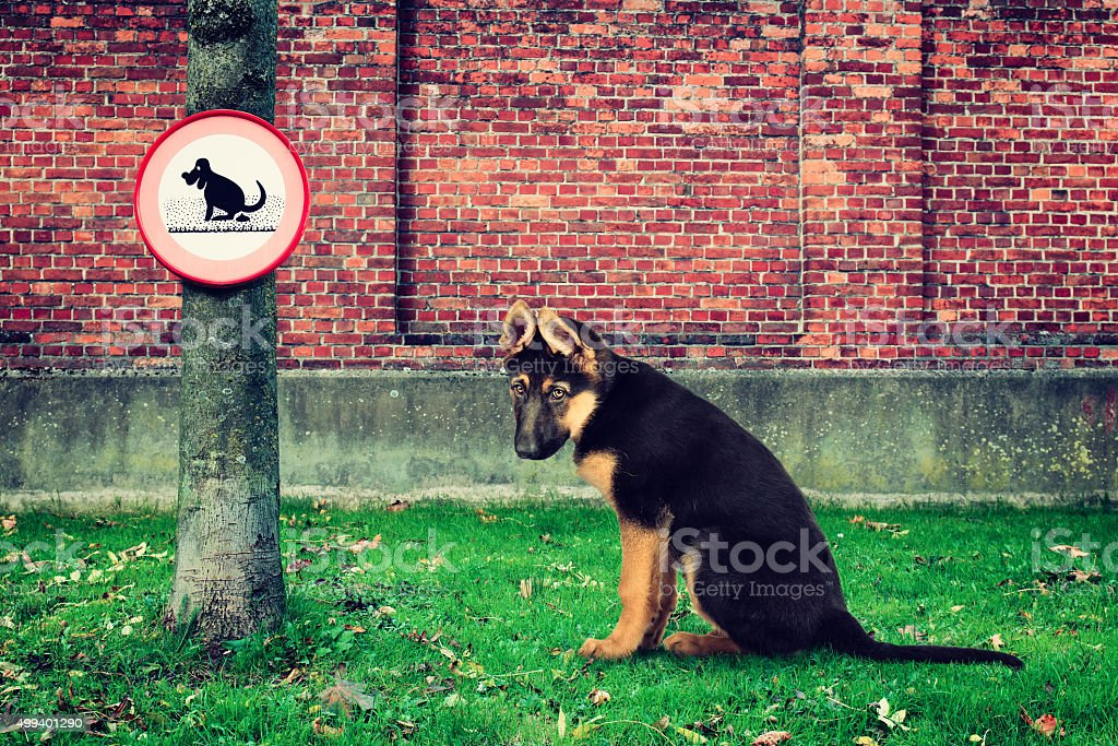 Sad dog disapointed next to no pooping sign stock photo