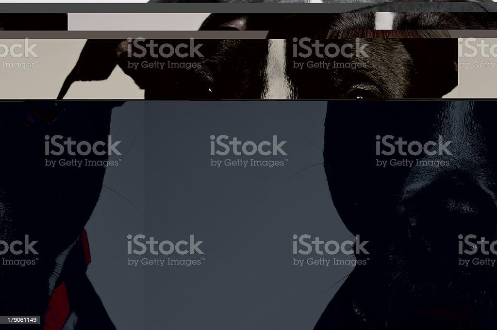 Sad Dog Face Portrait royalty-free stock photo