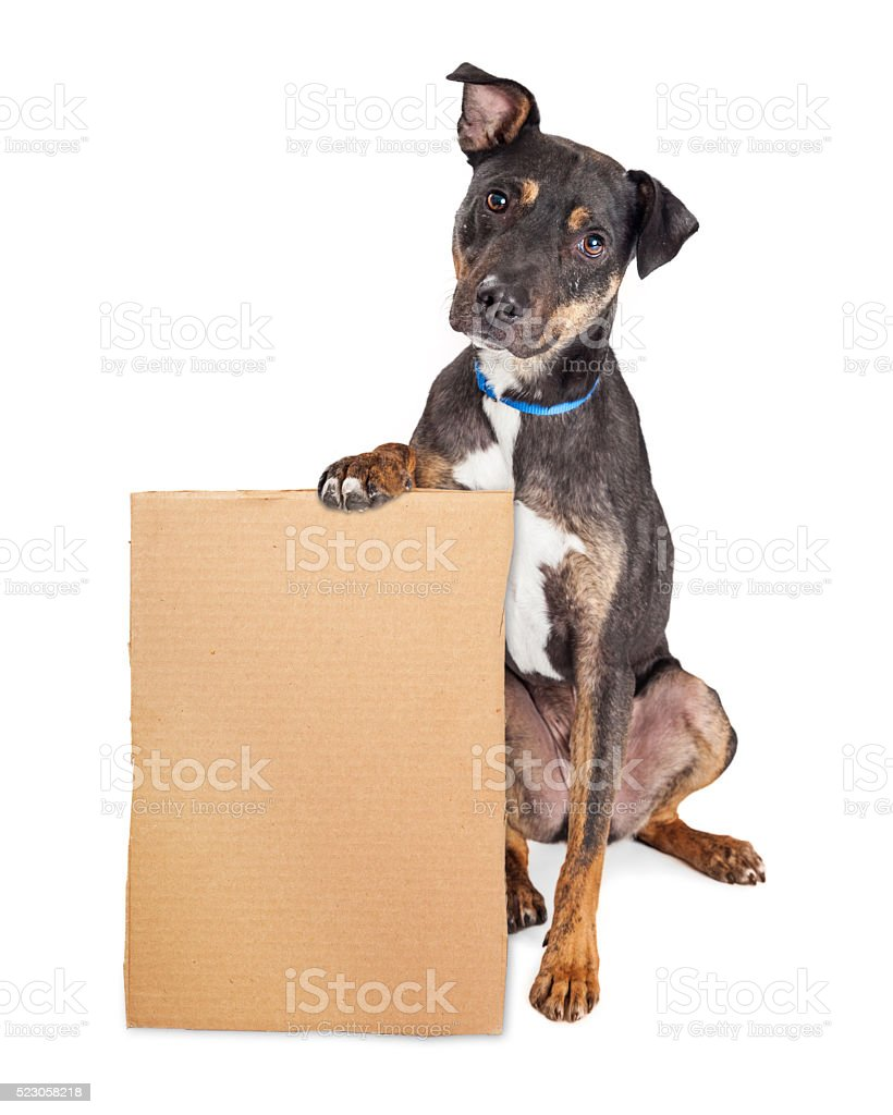 Sad Dog Holding Blank Cardboard Sign stock photo