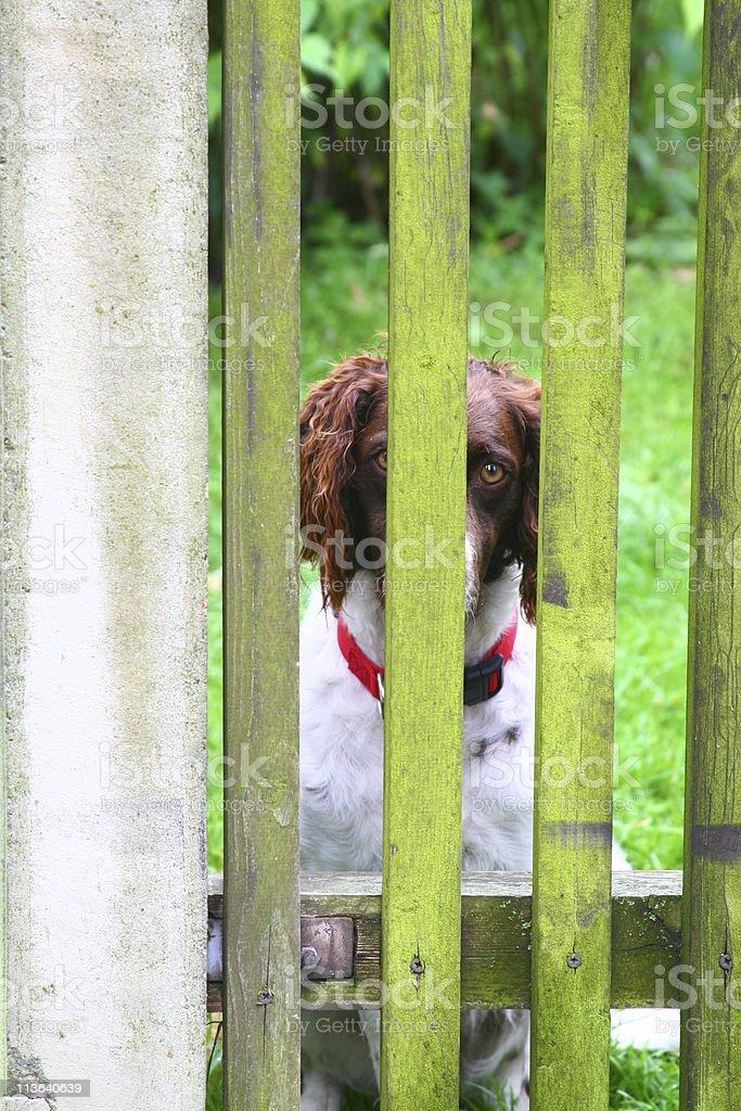 Sad dog in Graz stock photo
