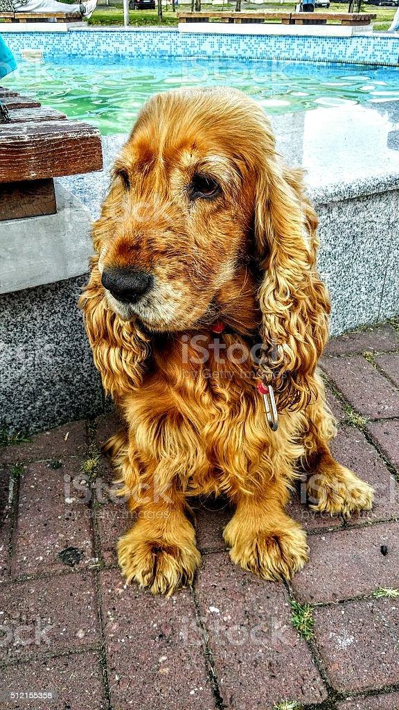 Sad dog look royalty-free stock photo
