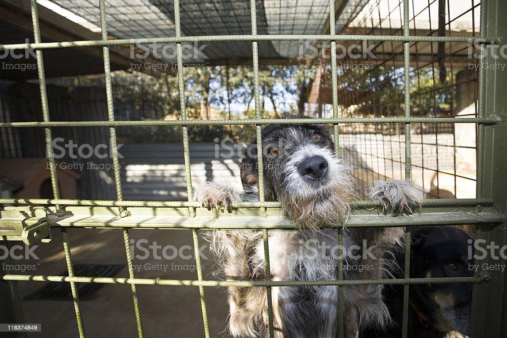 Sad dog stock photo