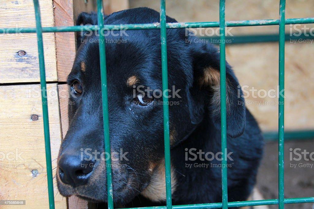 sad dog prisoners stock photo