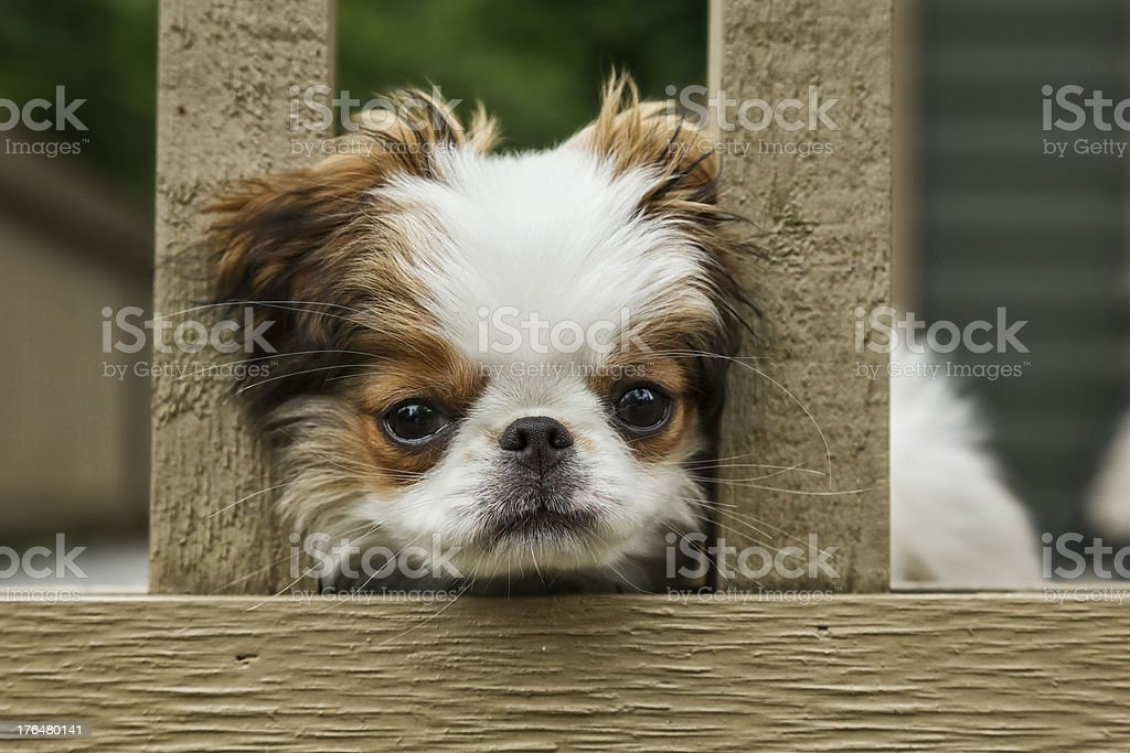 Sad Dog Wants to Come Out and Play royalty-free stock photo