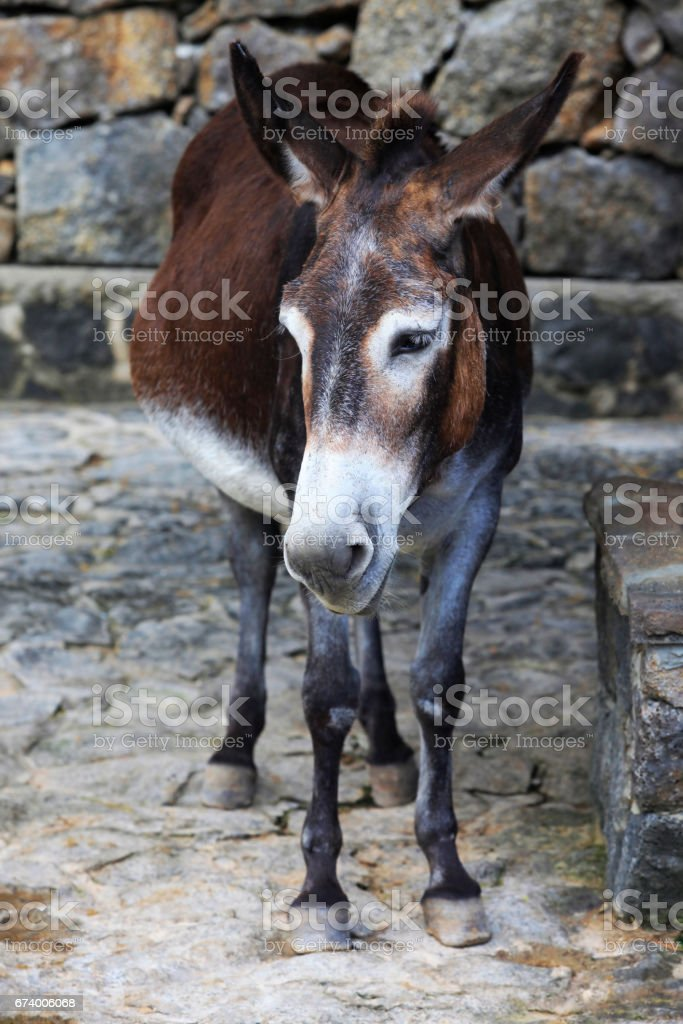 Sad donkey on a background of stones stock photo