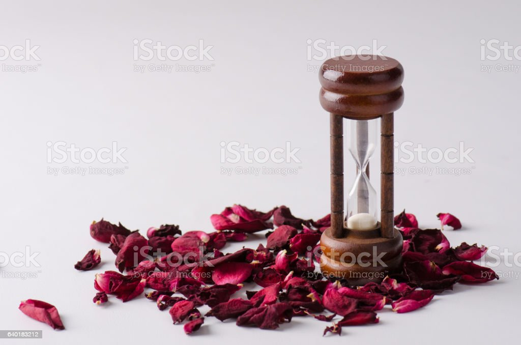 Sad drying rose with petals on the ground stock photo