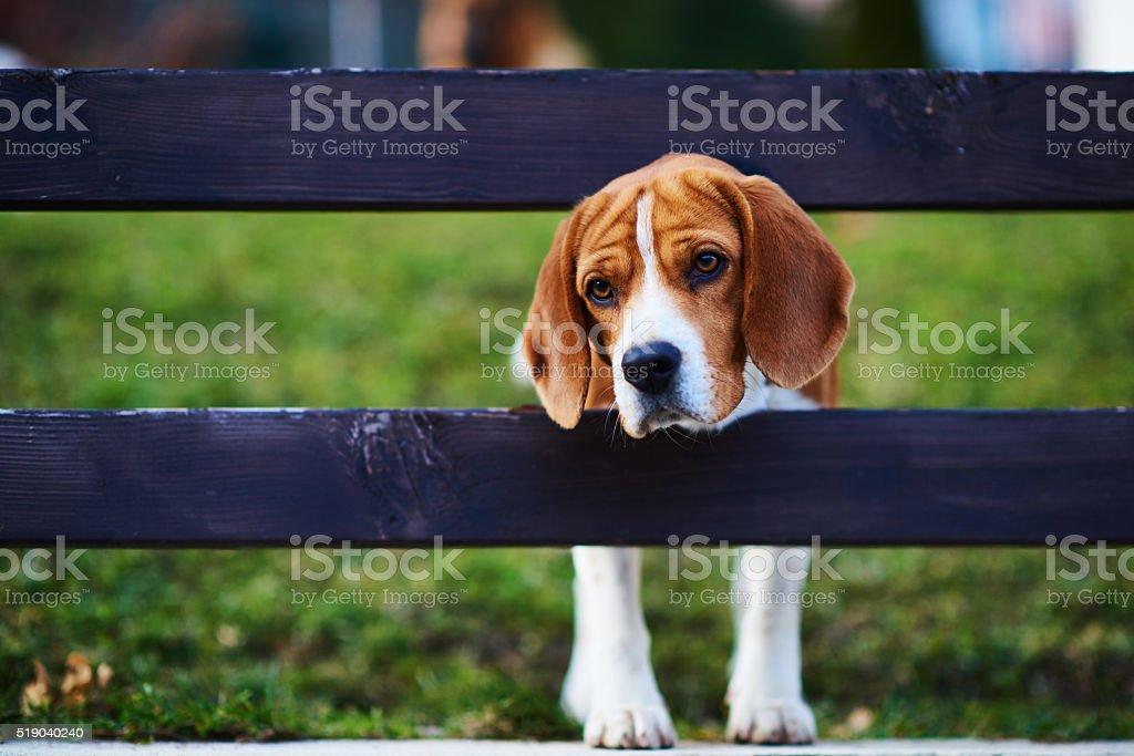 sad feeling of cute dog stock photo