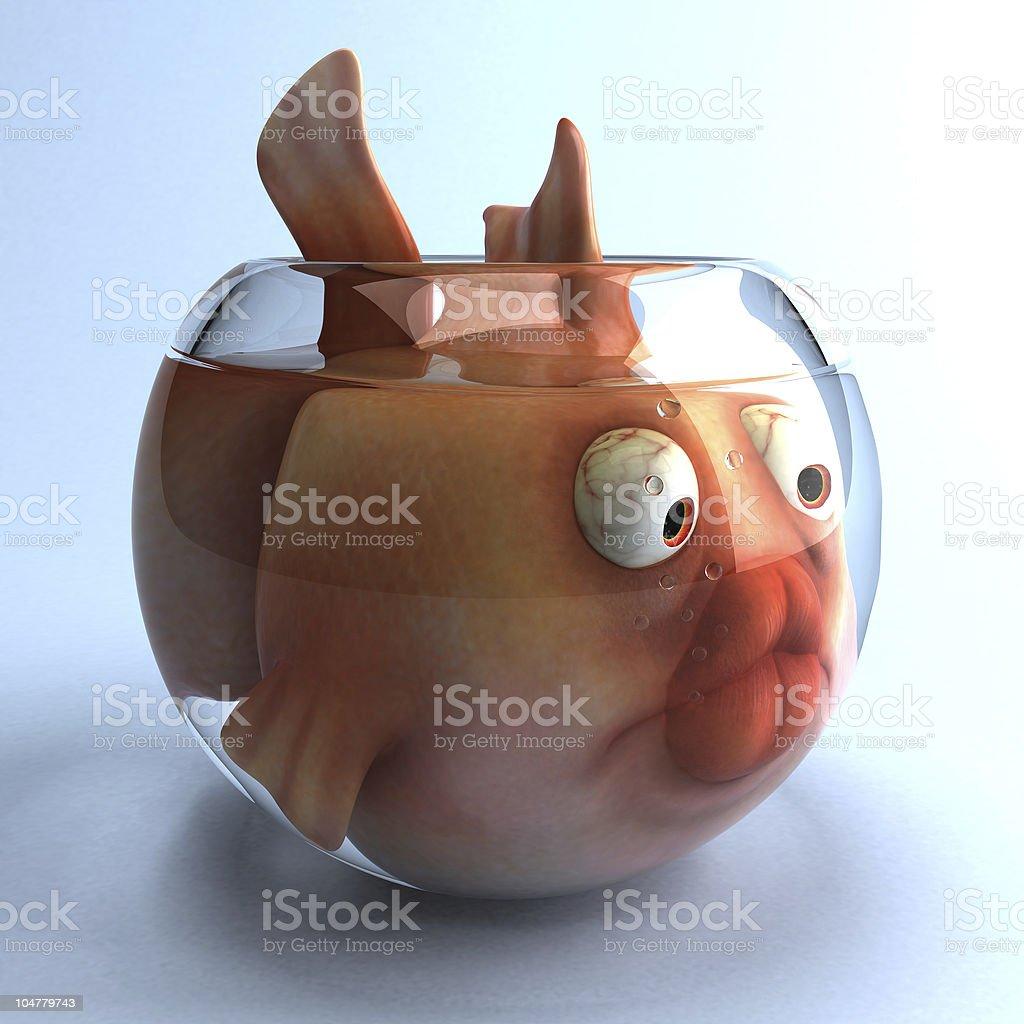 Sad fish stock photo