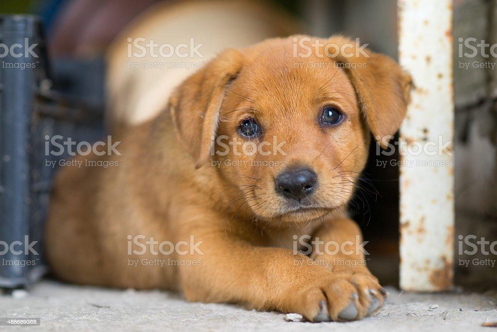 Sad Homeless Puppy Lay in the Corner stock photo