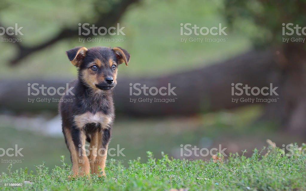 Sad homeless stray dog stock photo