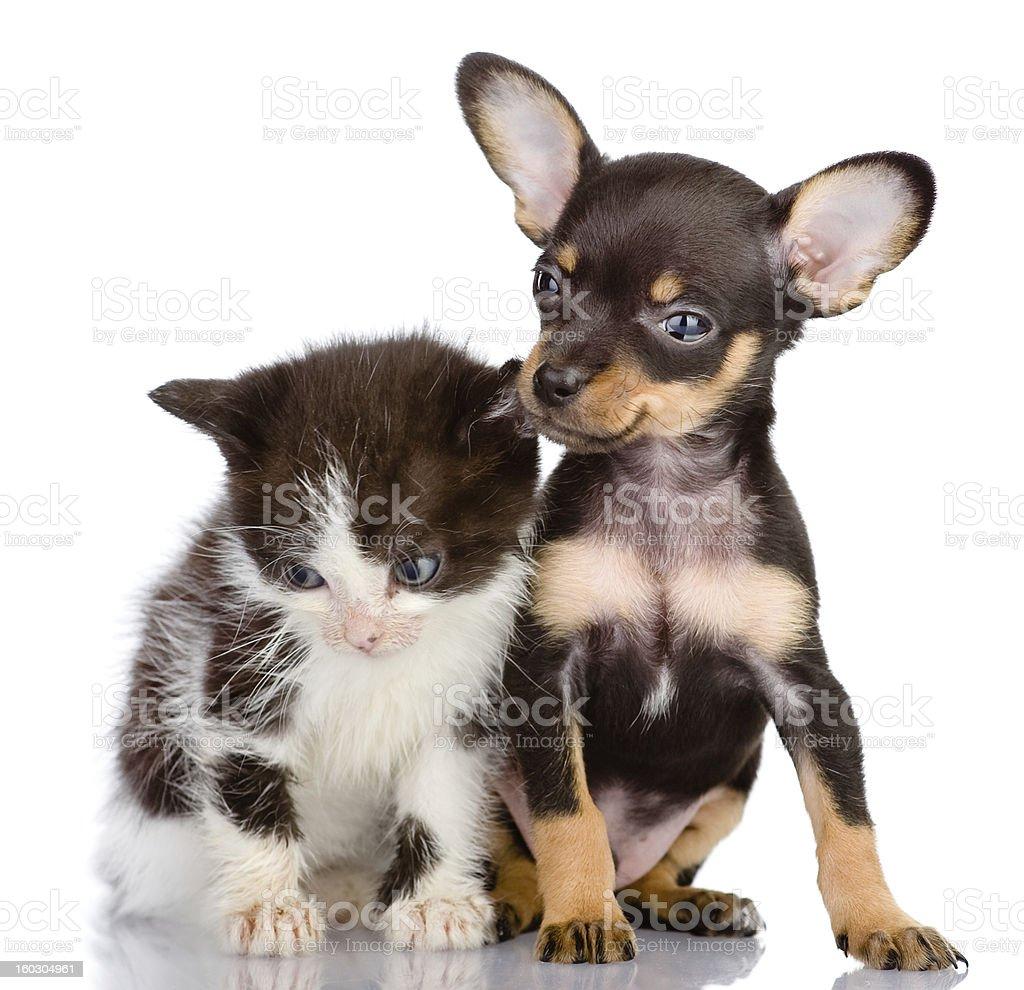 sad kitten and smiling dog royalty-free stock photo