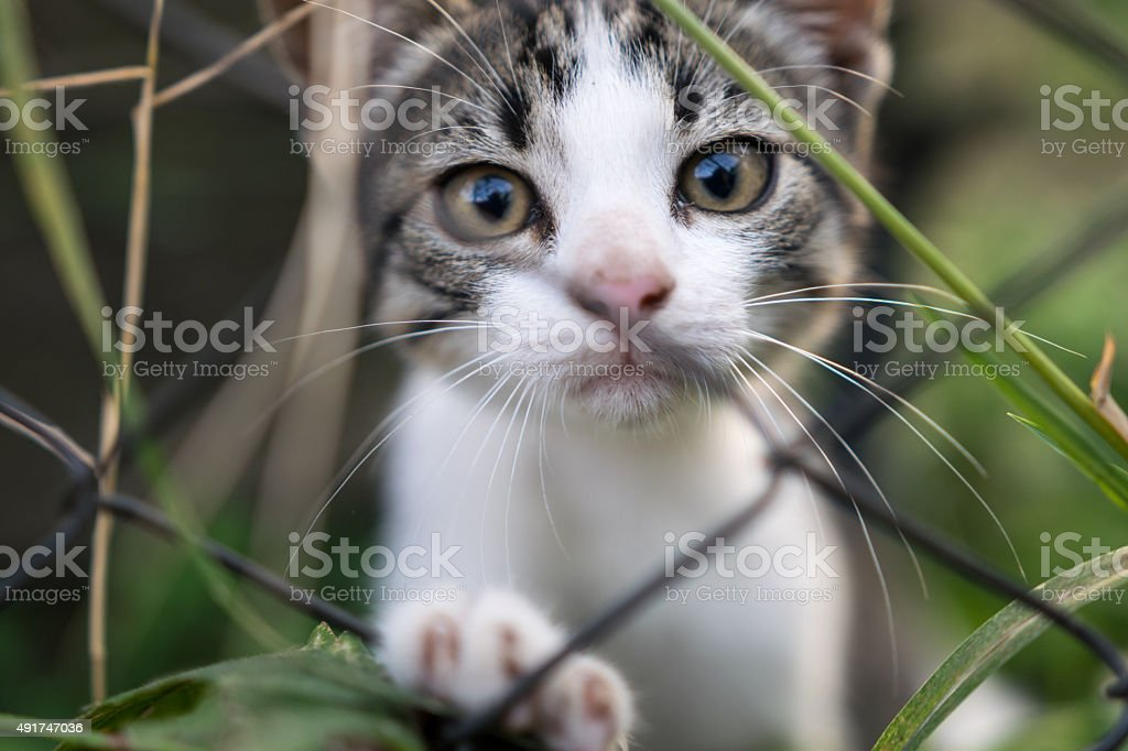Sad kitten beyond the fence stock photo