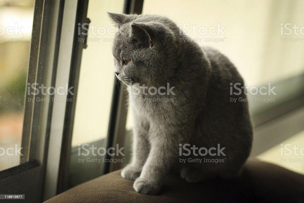 Sad kitten stock photo