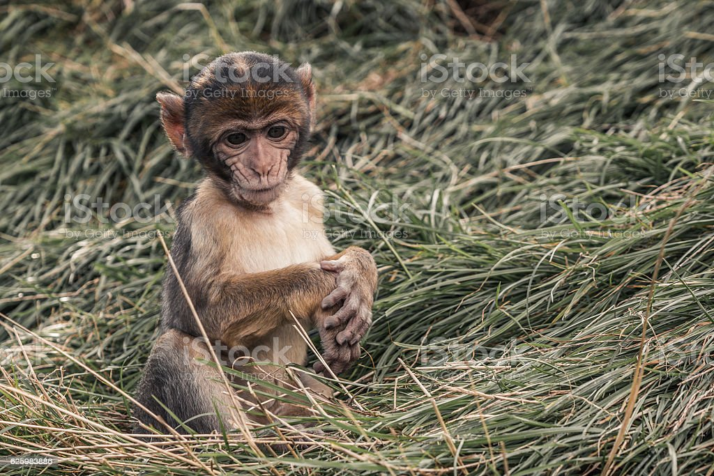 sad little monkey sitting in a grass stock photo