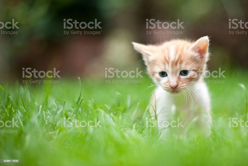 Sad lonely kitten stock photo