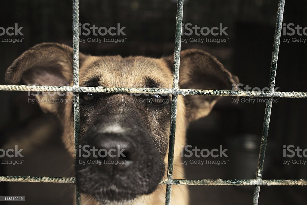 Sad looking dog in a wire cage stock photo