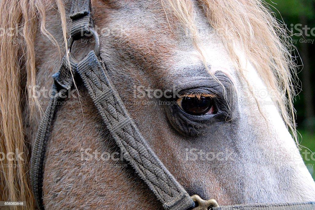 Sad looking horse stock photo