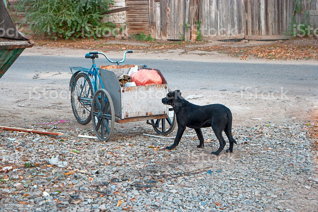 Sad looking street dog scavenging in rubbish cart of human stock photo